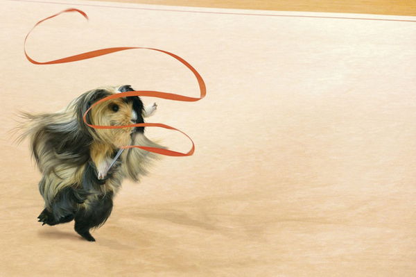 Guinea Pig Games 2013 - Rhythmic Gymnastics - Ribbon