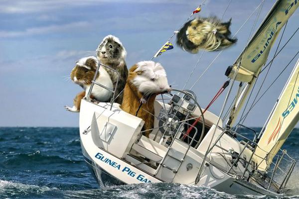 Guinea Pig Games 2013 - Sailing