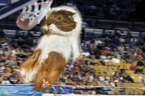 Guinea Pig Games 2013 - Basketball