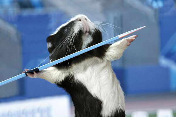 Guinea Pig Games 2013 - Javelin Throw