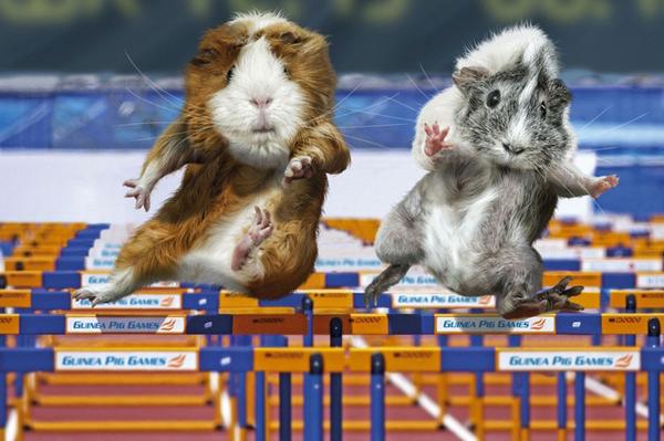 Guinea Pig Games 2013 - Hurdles