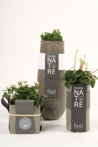 Packaging of plants - Fiori Flowers