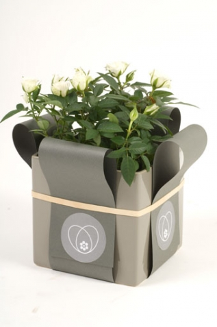 A flower box - Fiori Flowers