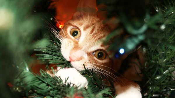 Cat's Guide to Christmas